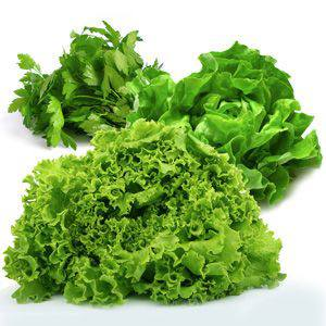 Lettuce and Greens