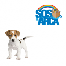 Donation Dog Shelter SOS El Arca